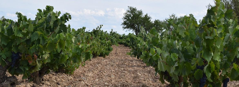 """Impartirmos la Jornada """"Marketing y Vino"""" en D.O. Cigales"""