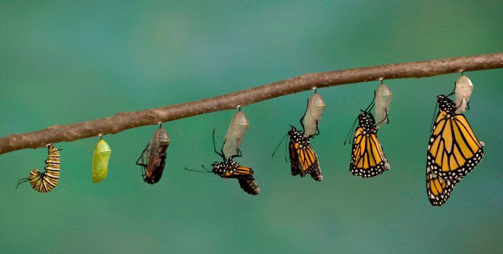 Ni solo es transformación ni solo es digital
